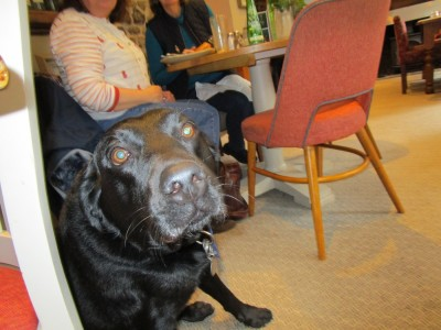 A287 dog-friendly pub with a dog walk near Rushmore, Surrey - Driving with Dogs