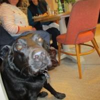 A287 dog-friendly pub with a dog walk near Rushmore, Surrey - Surrey dog-friendly pub with dog walk.JPG