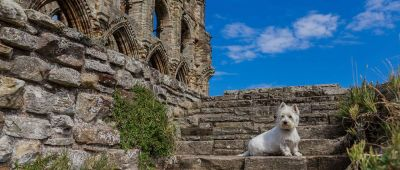 A69 dog-friendly castle with cafe and walks, Northumberland - Driving with Dogs