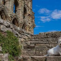 A69 dog-friendly castle with cafe and walks, Northumberland - dog-friendly castle and walks.jpg