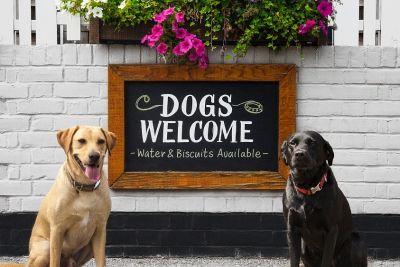 M1 dog-friendly pub and dog walk near Milton Keynes, Bedfordshire - Driving with Dogs