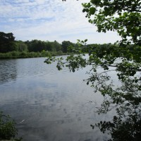 A382 Country Park dog walk, Devon - Devon dog walking places.JPG