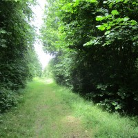 Woodland local dog walk, Leicestershire - National Forest dog walk Leicestershire