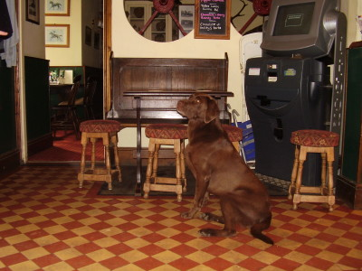 A30 Dog-friendly pub with dog walks nr Okehampton, Devon - Driving with Dogs