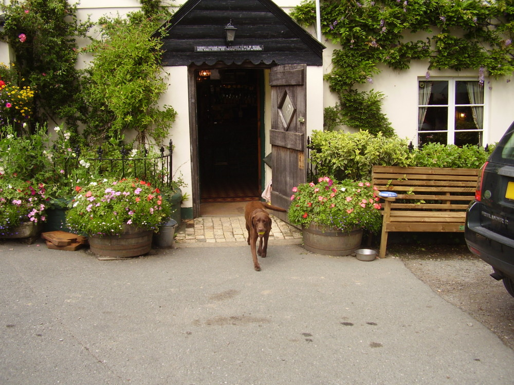 A30 Dog-friendly pub with dog walks nr Okehampton, Devon - Dog walks in Devon