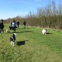 Berkhamsted dog walks, Hertfordshire - Dog walks in Hertfordshire