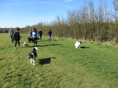 Berkhamstead dog walks, Hertfordshire - Driving with Dogs