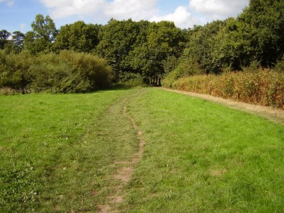 Beacon Country Park dog walks, Lancashire - Driving with Dogs