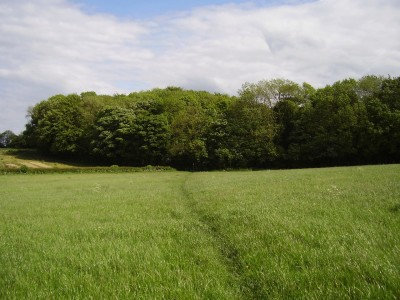A1M Junction 45 dog-friendly pub and dog walk, Yorkshire - Driving with Dogs