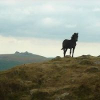 Dartmoor dog-friendly pub and holiday cottage, Devon - Dartmoor dog-friendly pubs.jpg