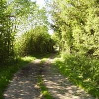 A1M Junction 46 dog walk near Bilton, North Yorkshire - Dog walks in Yorkshire