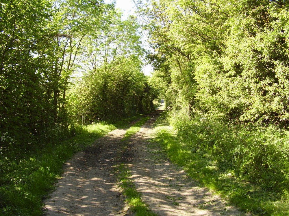 A1M Junction 46 dog walk near Bilton, Yorkshire - Dog walks in Yorkshire