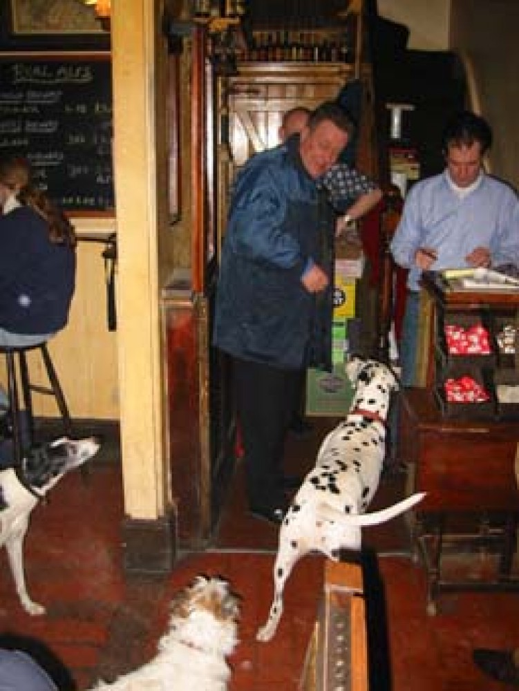 Meon Valley dog-friendly pub and walkies, Hampshire - Dog walks in Hampshire