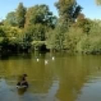 Waterlow Park local dog walk, Greater London - Dog walks in Greater London
