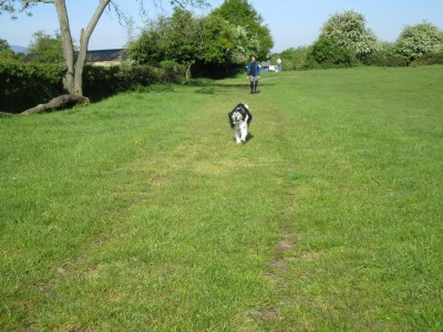 A38 dog walk near Worcester, Worcestershire - Driving with Dogs