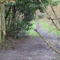 Forest dog walk and dog-friendly pub, Surrey - Dog walks in Surrey.JPG