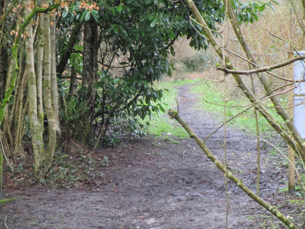 Forest dog walk and dog-friendly pub, Surrey - Dog walks in Surrey.JPG
