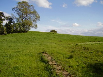 A1 Junction 47 dog walk and dog-friendly inn, North Yorkshire - Driving with Dogs