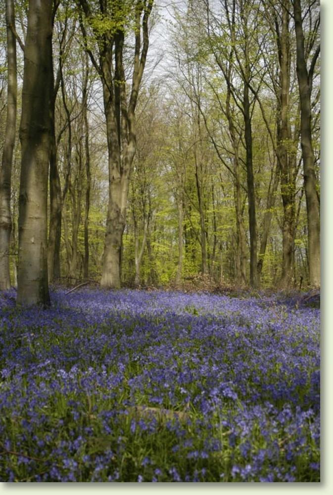 Bushy Leaze Woods dog walk, Hampshire - Dog walks in Hampshire