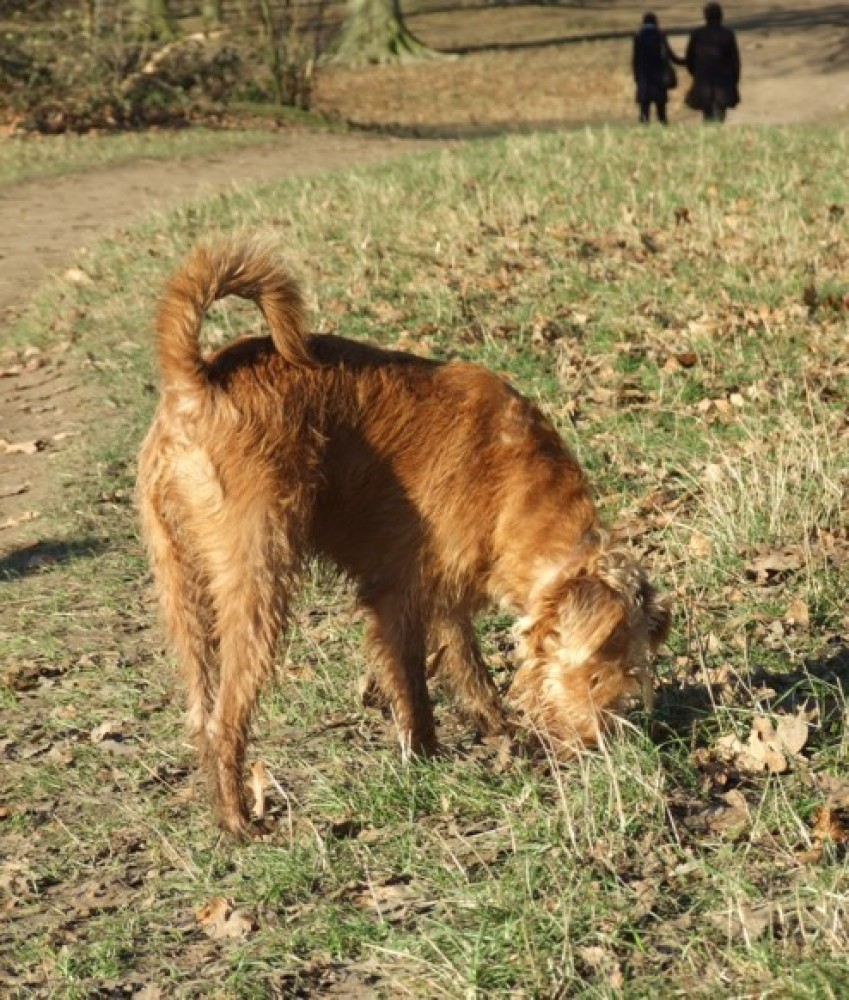 Hanworth Park, Feltham, Greater London - Dog walks in Greater London