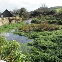 A352 Lulworth dog-friendly inn and walks, Dorset - IMG_0528.JPG
