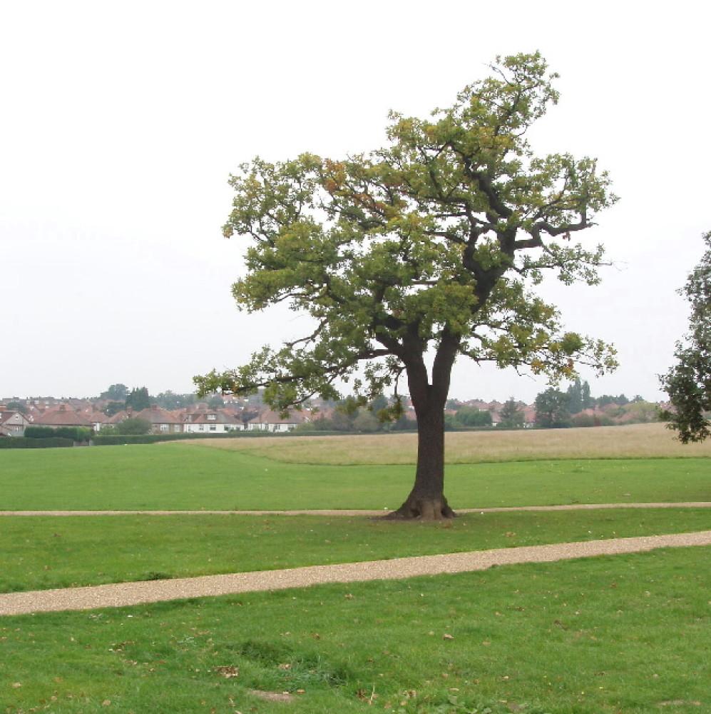 Gladstone Park local dog walk, Greater London - Dog walks in Greater London