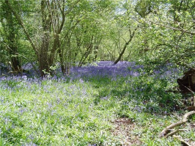 Elmstead Wood local dog walk in Bromley, Kent - Driving with Dogs
