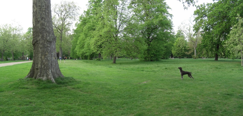 Hyde Park local dog walks, Greater London - Dog walks in Greater London