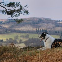 Cambusbarron dog walk near Stirling, Scotland