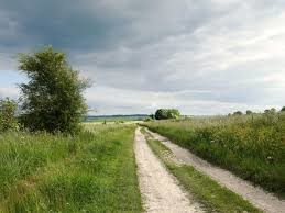 Dog walk on the ancient Ridgeway Trail, Oxfordshire - Driving with Dogs