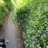 A361 Dog-friendly coaching inn and dog walk, Devon - Devon dog walk and dog-friendly pub.JPG
