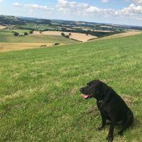 A30 dog walk and dog-friendly inn and B&B, Wiltshire - dog walk and dog-riendly dining on the A30.jpg
