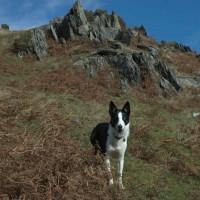 Bearded Lake dog walk near Aberdovey, Wales - Dog walks in Wales