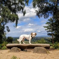 Alderley Edge dog walk, Cheshire - cheshire dog walk.jpg