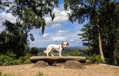 Alderley Edge dog walk, Cheshire - Driving with Dogs