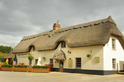 Wimborne dog-friendly pub and walk, Dorset - Driving with Dogs