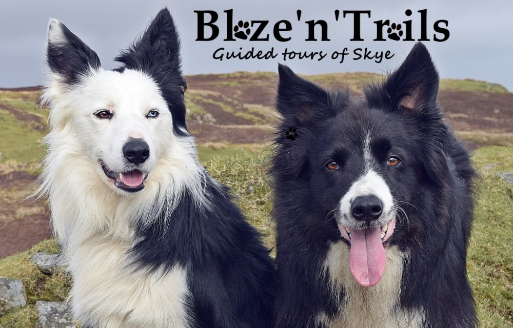 Take a dog walk on the Wildside in Skye