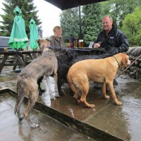 Dalesway dog walk and friendly pub, Yorkshire - Wet dogs in the Yorkshire Dales