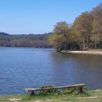 Shear Water dog walk - Longleat Estate, Wiltshire - Dog walks in Wiltshire