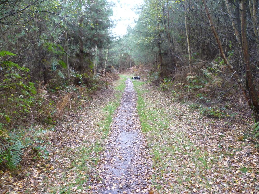 Ballymoyer Woodland dog walk, NI - Dog walk in Northern Ireland