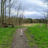 Local Dog Walk: Wheatacre Woods, Lancashire - IMG_20200307_143117_1.jpg