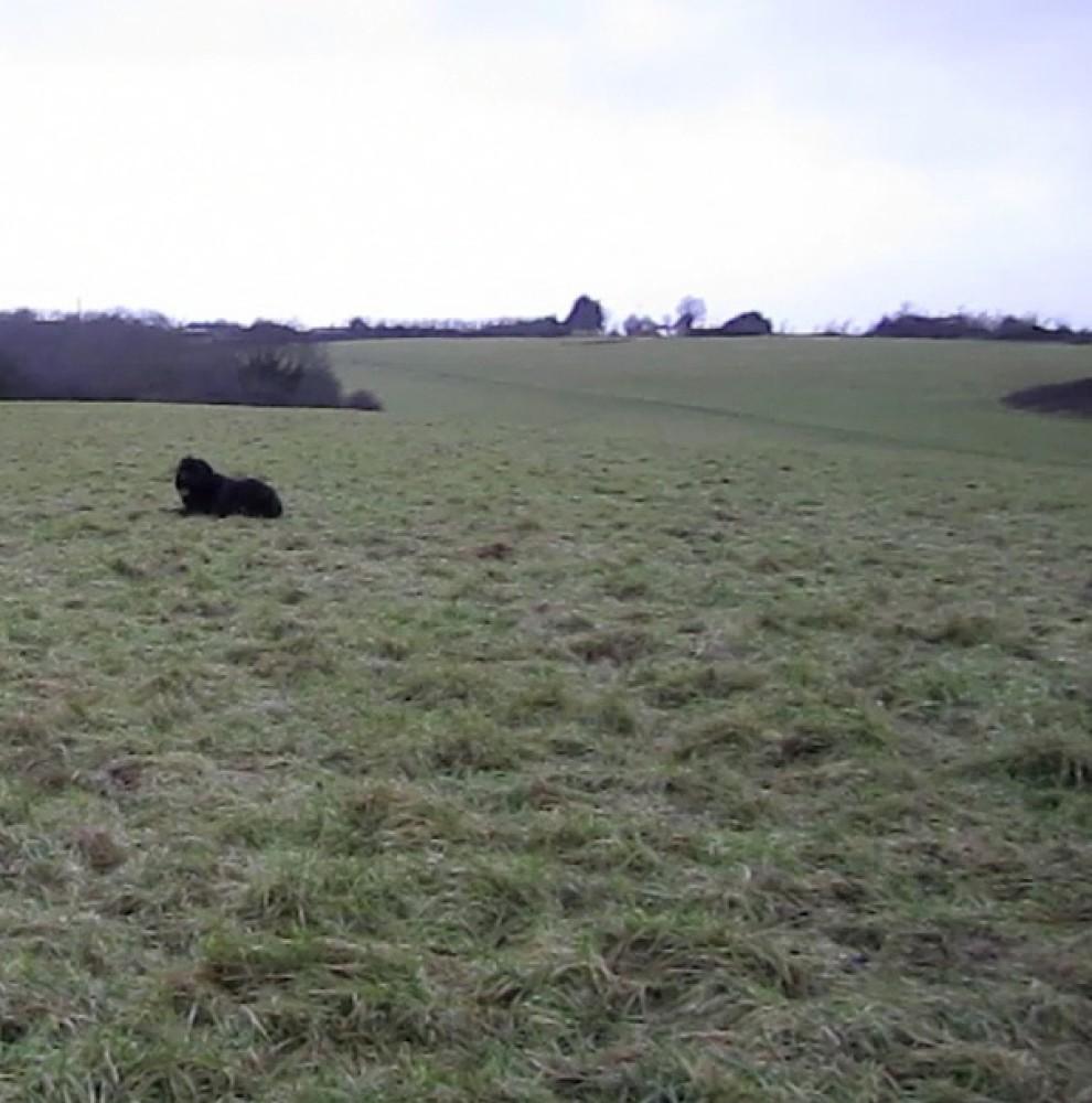 Yellow House dog walk, Gloucestershire - Dog walks in Gloucestershire