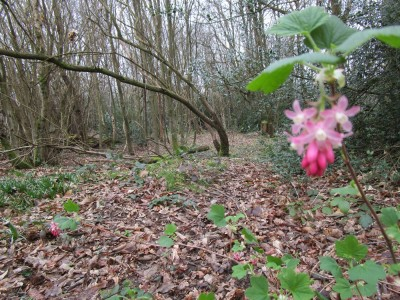 A21 woodland dog walk near Sevenoaks, Kent - Driving with Dogs