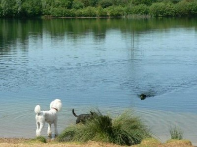 Whisby Nature Park dog walk near Lincoln, Lincolnshire - Driving with Dogs