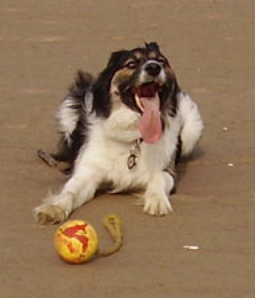 A92 dog-friendly beach at Inverbervie, Scotland - Dog walks in Scotland