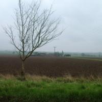 Bishopthorpe riverside dog walk, Yorkshire - Dog walks in Yorkshire