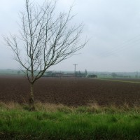Bishopthorpe riverside dog walk, North Yorkshire - Dog walks in Yorkshire