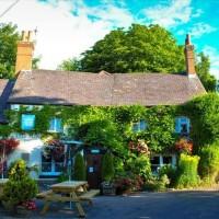 A339 dog-friendly pub, Hampshire - Hampshire dog-friendly pub and dog walk