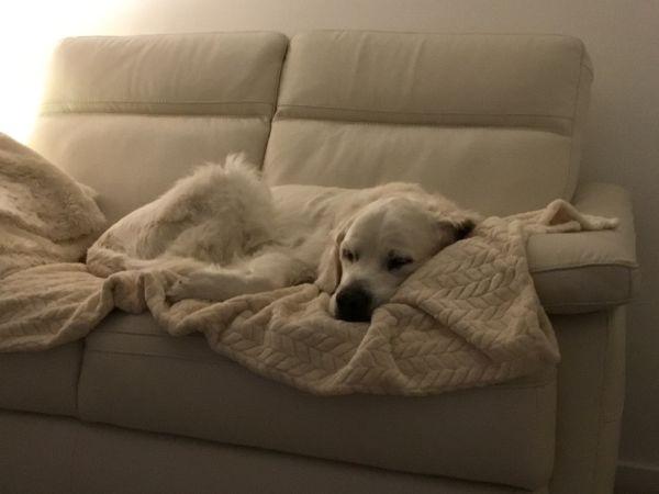 Comfy Ben