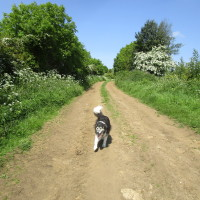 Smart dog-friendly pub and dog walk, Northamptonshire - Dog walks in Northamptonshire